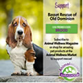 Animal Wellness Magazine banner of a basset hound.