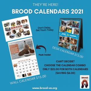 BROOD Calendars 2021 Social Media