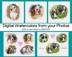 Website Watercolor Graphic