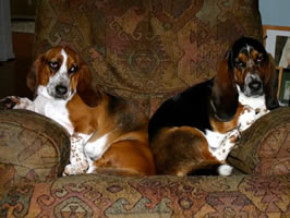 Beauregard & Molly adopted in 2009 by Chris & Marty McGuirk