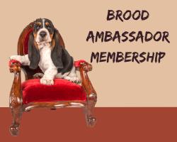 BROOD AMBASSADOR MEMBERSHIP WEBSITE