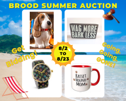 Website BROOD Summer Auction 2021