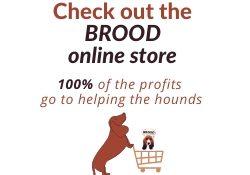 BROOD Store web 1