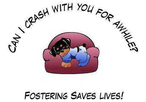fostering saves lives1