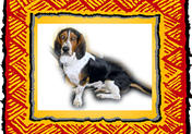 decorative photo of basset hound
